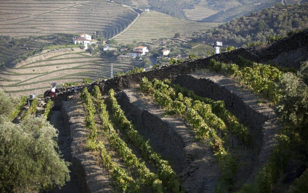 Amazing Douro Valley